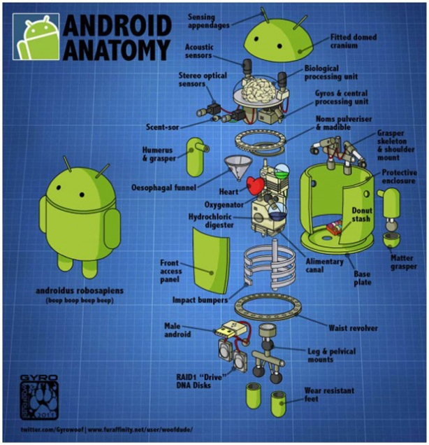 anatomia-do-android